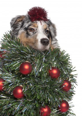 dog-christmas-tree